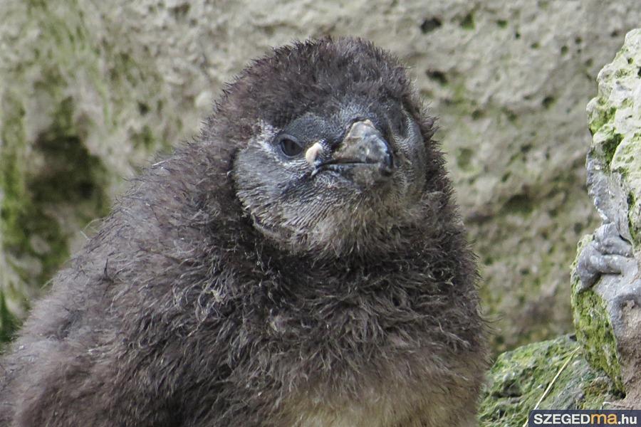pingvin05_gs