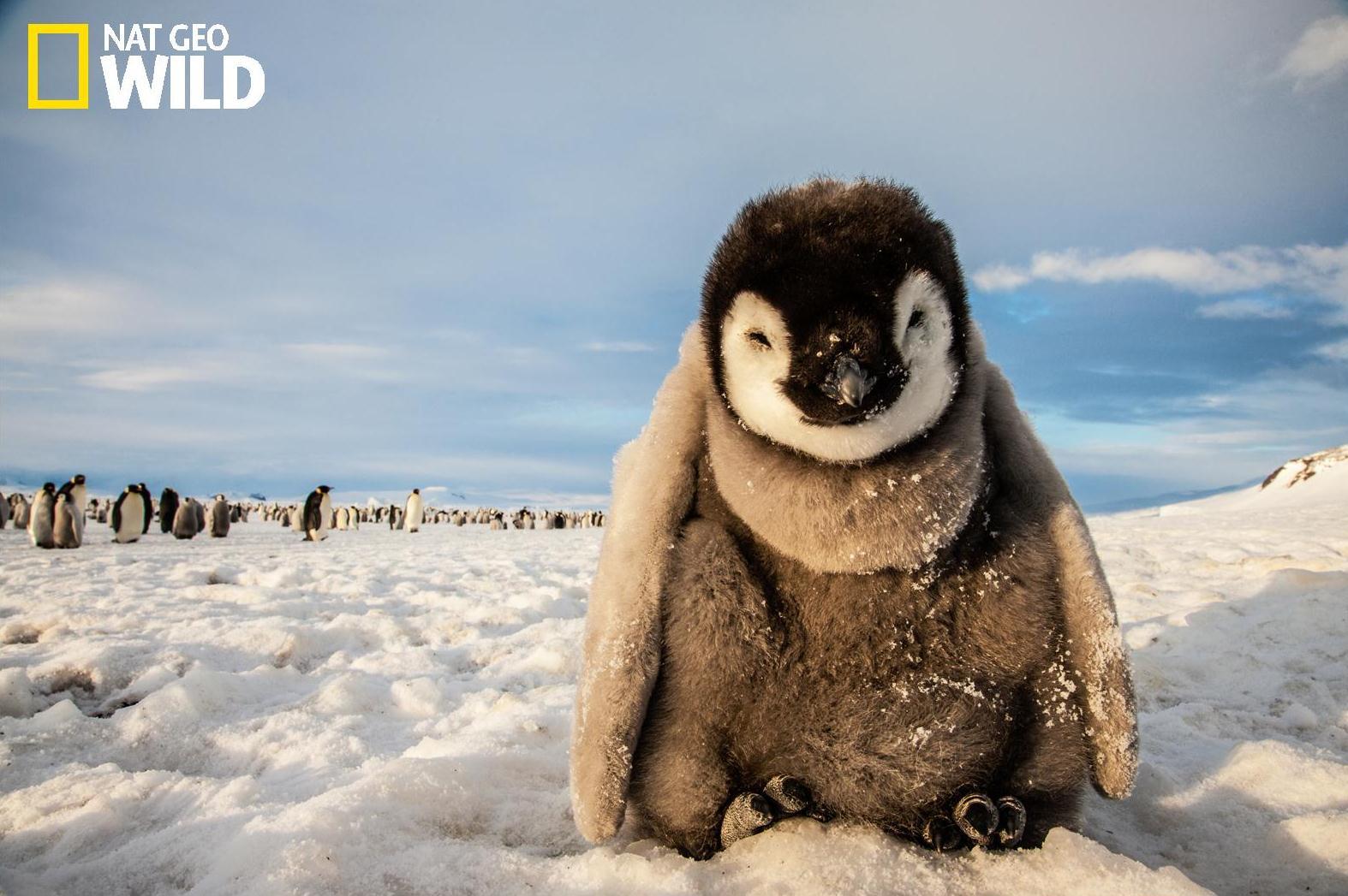 pingvin_NGW