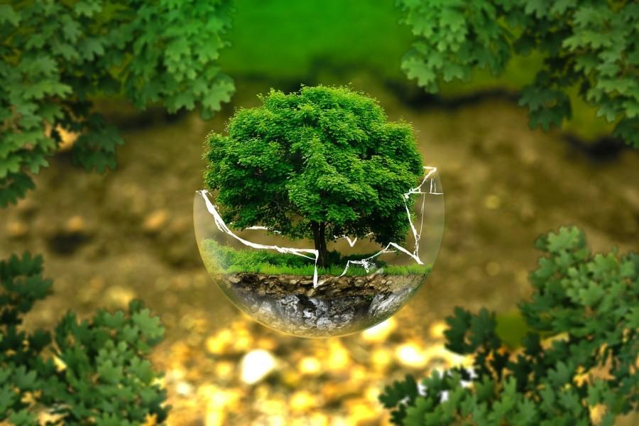 kornyezetvedelem_termeszetvedelem_wwf