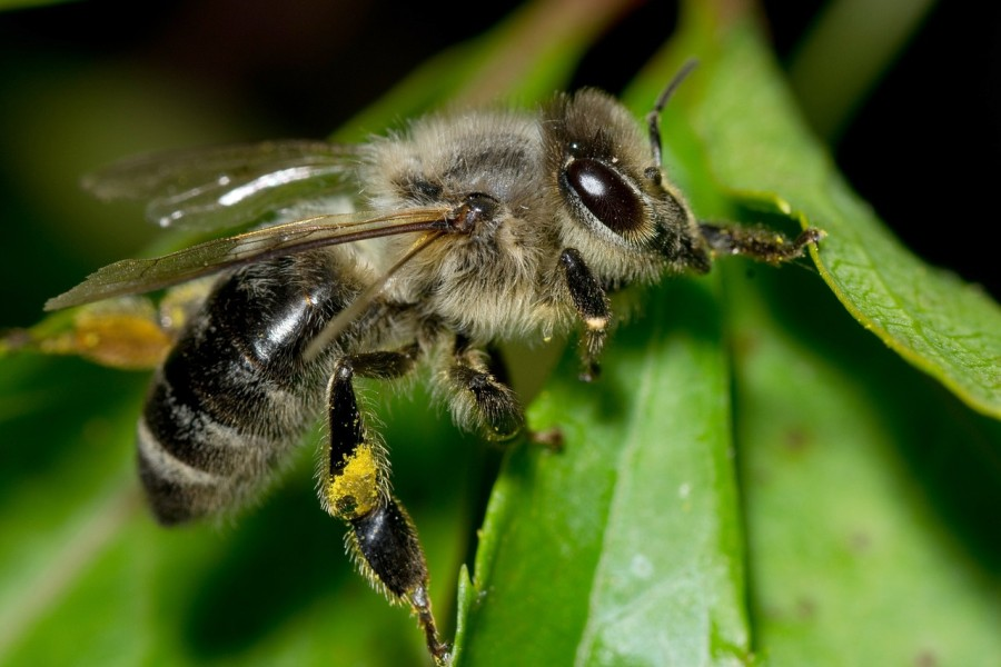 meh_mez_tavasz_pollen_termeszet