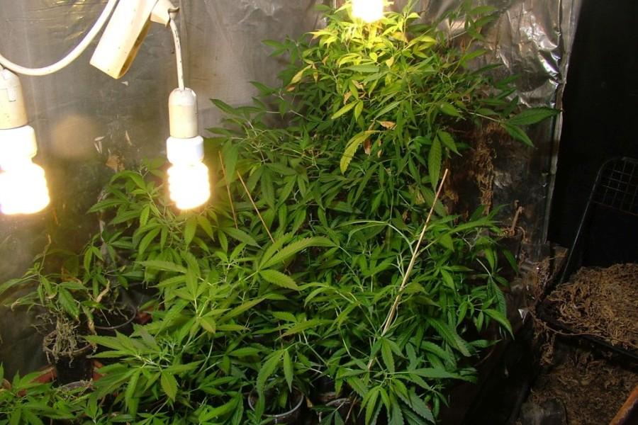 marihuana_szeged_police