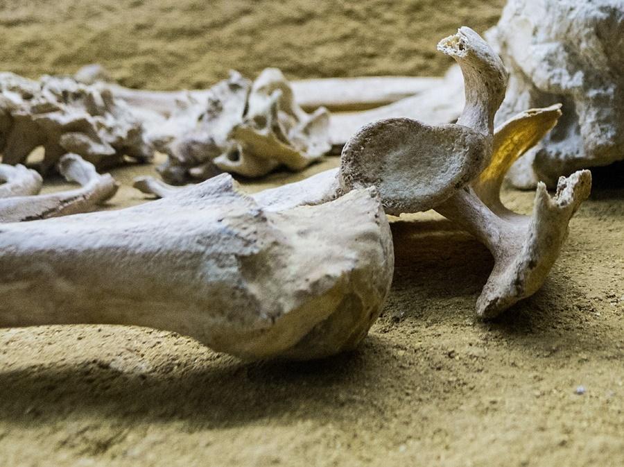 csont_csontvaz_regeszet_sir_halott