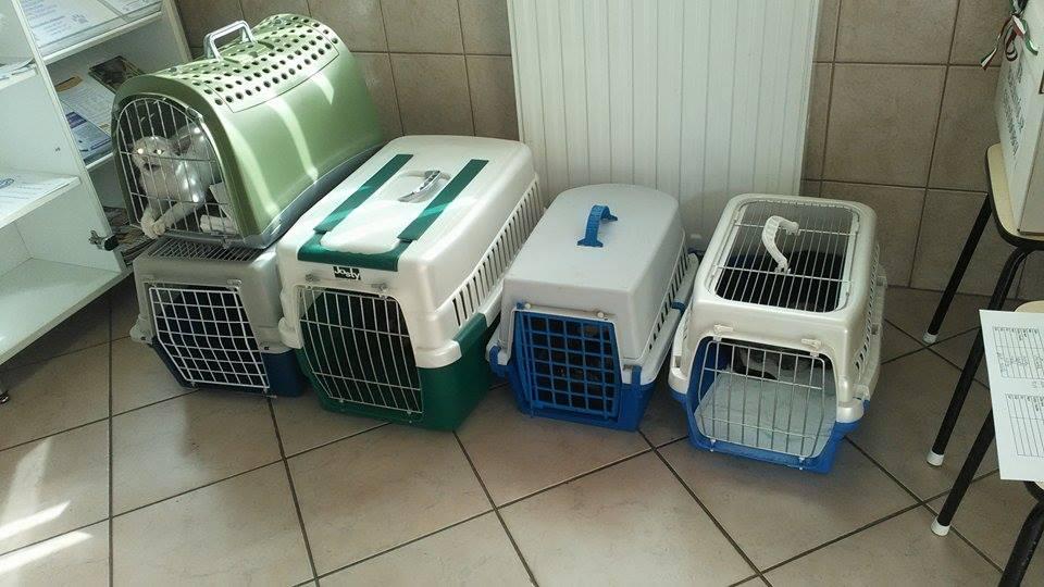 zsinagógás cicák az állatorvosnál