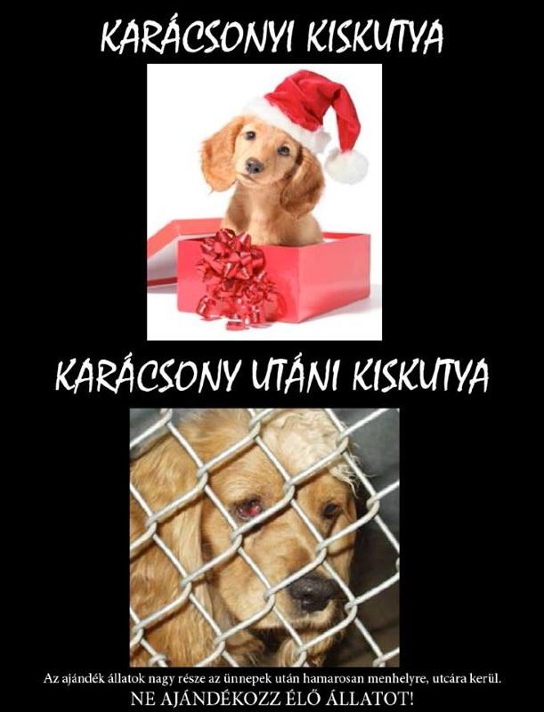 karacsonyi_ajandek_kutya