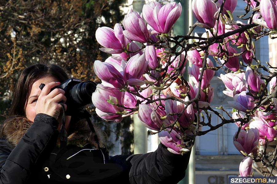 magnolia09_gs