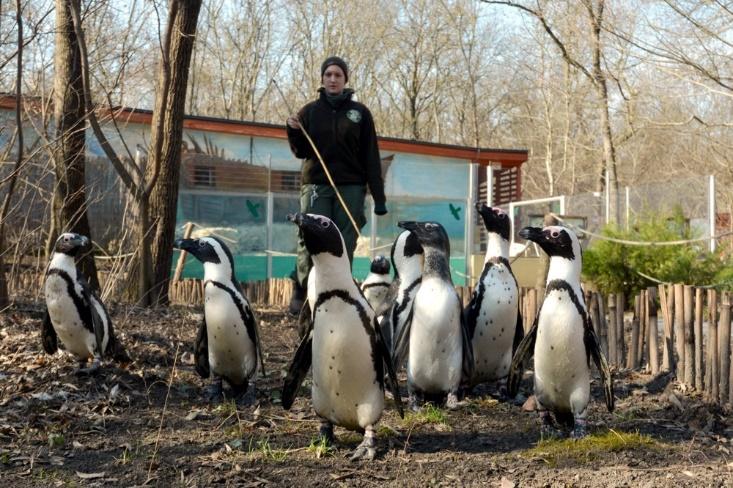 pingvinek_vadaspark