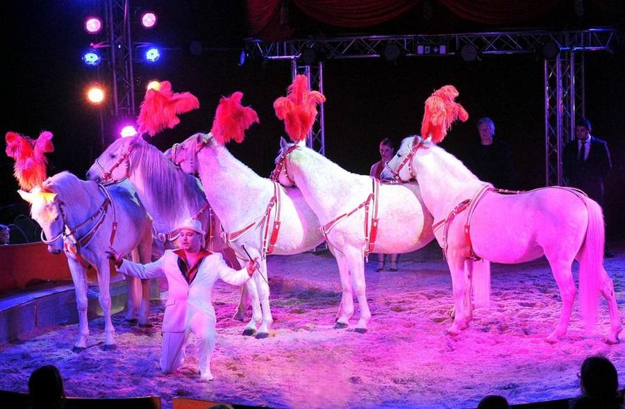 eotvos_cirkusz_lovak