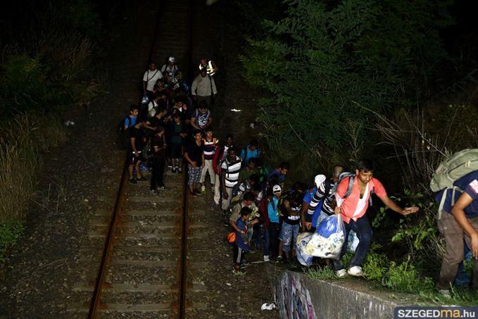 migráció, menekültek tartanak Szeged felé a szerb-magyar határról